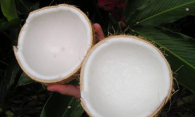 You must try this nutritious Coconut rice!