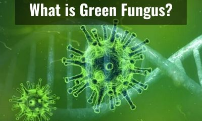 All you need to know about Green Fungus