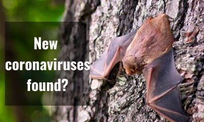 Report: Chinese researchers find batch of new coronaviruses in bats