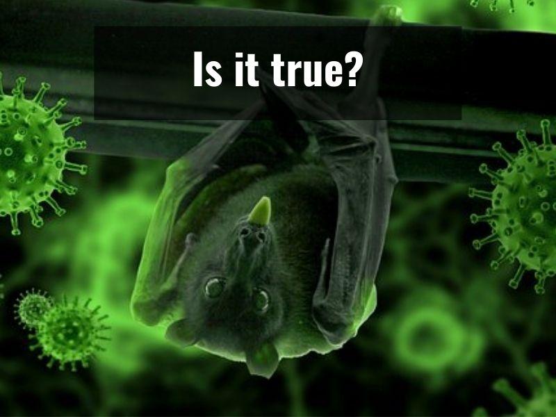 Coronavirus came from animal: Study