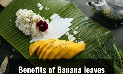 Do you know why Indians prefer to eat on Banana leaves?