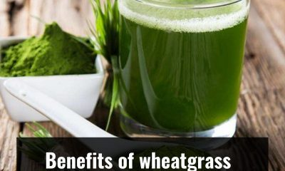 Here are the amazing health benefits of Wheatgrass