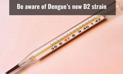 Dengue's new D2 strain can lead to high-grade fever and shock syndrome