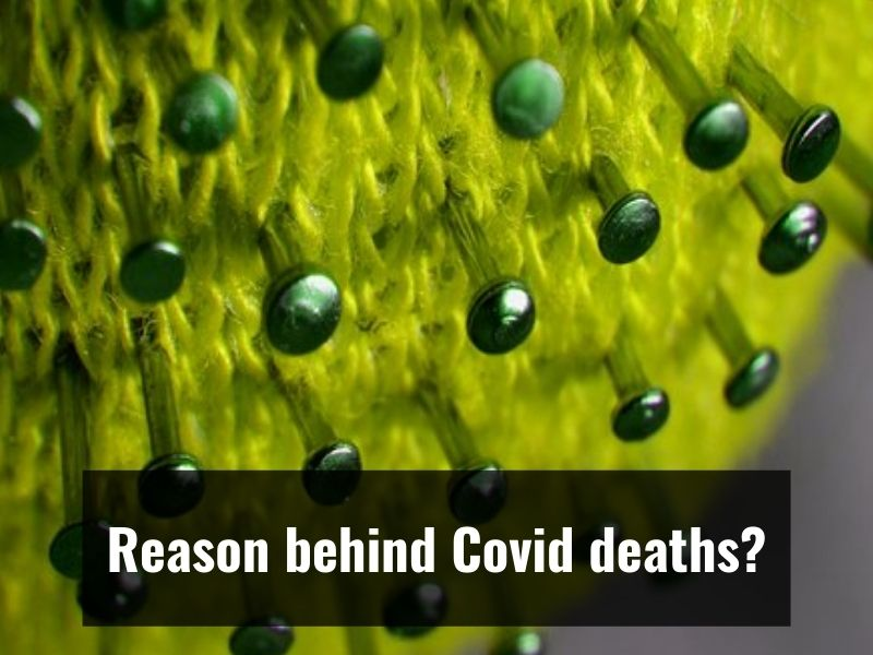 Coronavirus buildup in lungs likely driver of Covid deaths: Study
