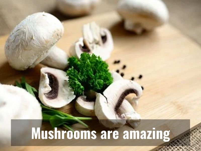 Eating Mushrooms could lower risk of Depression