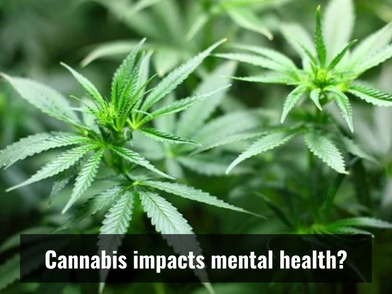 Study: Use of Cannabis can worsen risk of poor mental health