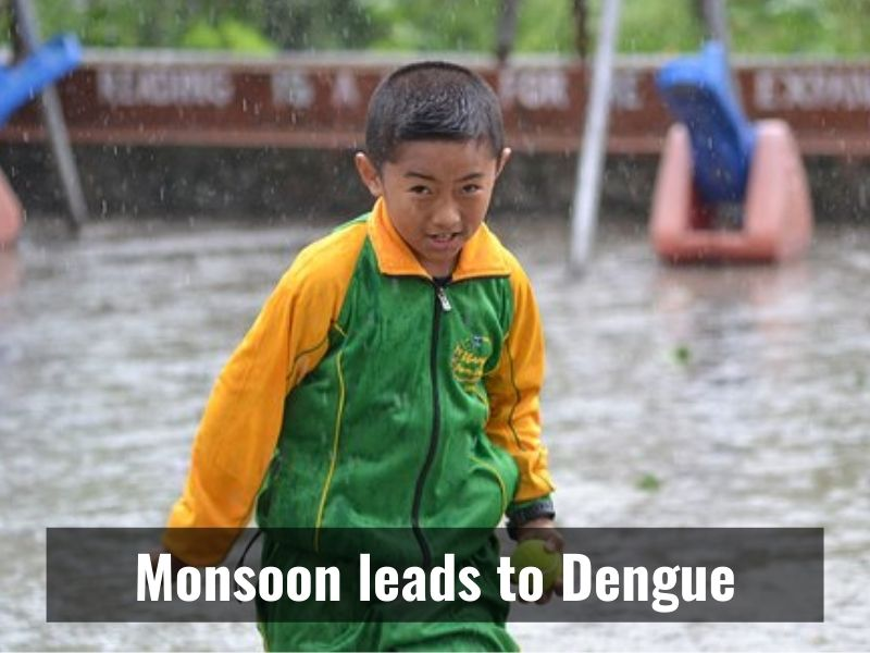 Dengue cases to increase due to waterlogging post Monsoon: Experts